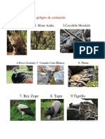 10 Especies en Peligro de Extinción en Guatemala