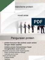 metabolismeprotein-171020092402