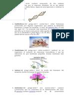 Glosario Del ADN