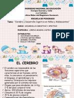 Cerebro y h Cognitivas