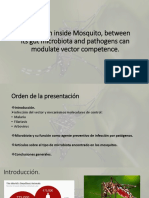 PPT Microbiota Mosquitoes.