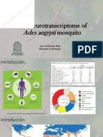 Neurotranscriptoma de Aedes