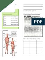 evaluación.ciencias musculosdocx