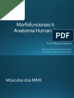 17 - Sistema Muscular - músculos do quadril e coxa.pdf