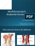 Sistema Muscular - músculos do tórax e abdome.pdf