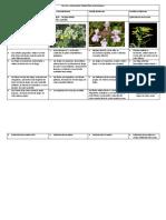 Platas Vasculares Terrestres Con Semilla Botánica