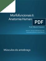 16 - Sistema Muscular - músculos do antebraço e mão.pdf