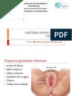 anatomia y fisiologia del aparato rep femeninno y masculino