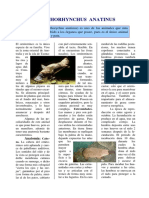 tif1u22_ornitorrinco