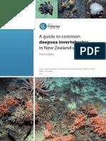 Deep Sea Creatures of New Zealand