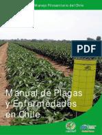 Plagas y Enfermedades de chile.pdf