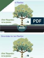 Arbol Filogenetico de Las Plantas