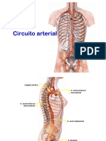 Circuito Arterial