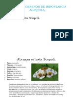 FAMILIAS Y GENEROS.pptx