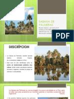 SABANA DE PALMERAS.pptx