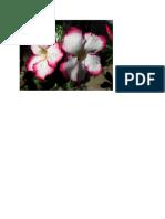 bunga 7