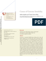 Causes of Genome Instbility