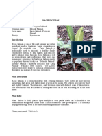 kacipfatimah_en.pdf