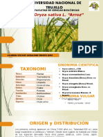 Oryza Sativa L- ARROZ