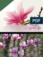 1-FLO-Magnolias-Romeo & Juliet-Andre Rieu Violin