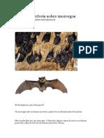 13 Fatos Incríveis Sobre Morcegos