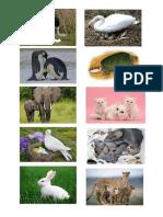 gambar haiwan