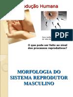 Morfo-fisiologia Do Sistema Reprodutor