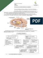 102656744-Guia-de-Biologia-3º-Medio-Sistema-Nervioso-Central.pdf
