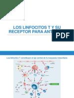 Los Linfocitos T y Su Receptor
