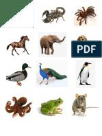 Animales Imagenes