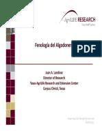 Fenología Del Algodonero. TAMU