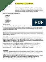 Aminoglucósidos y Sulfonamidas - Farmaco
