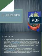 EL+CEREBRO....