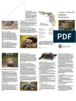 A guide to living with gopher tortoises