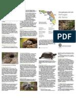Una guía para vivir con Tortugas de tierra