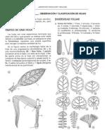 25 Clasificacion de hojas