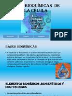 Base Bioquímicas de La Célula