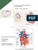 a14_funzione_cardiovascolare_il_cuore.pdf
