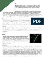 Aminoácidos esenciales y no escesnsiales.docx