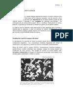 TEXTURAS DE MENAS Y GANGAS.pdf