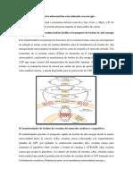 Bioquimica - Segundo Pico