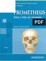 Neuroanatomia Prometheus