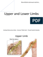 Upper and Lower Limbs Revised
