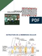 Membrana y transporte ppt