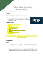 Practica 2 Genetica G1 de Drosophila Melanogaster