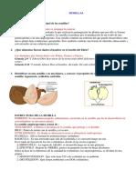 Especialidad de Semillas Desarrollada (1)