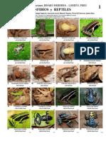 286 PERU Jenaro Herrera Anfibios y Reptiles.pdf
