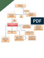 Quimioreceptores Centrales
