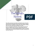 Anatomy Urinary System