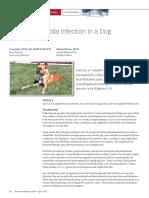 Recurrent Giardia Infection.pdf
